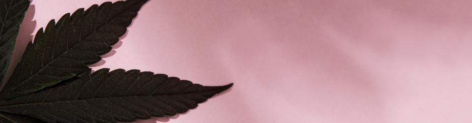 Love & Trust: Die Philosophie hinter Sveta